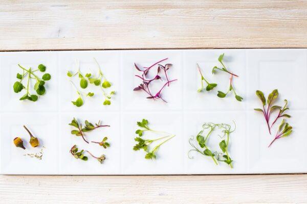 mikro zioła