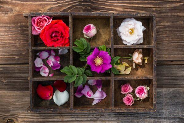 róża – tradycyjna, rogoza i mini oraz płatki róż