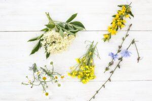 kwiat rukoli, kwiat czarnego bzu, cykoria podróżnik, rumianek