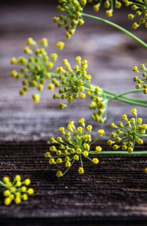 kwiat kopru tradycyjnego i anyżowego