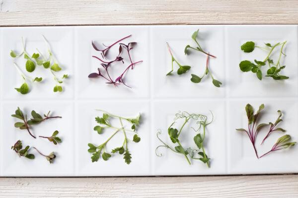 rukiew wodna, mikro amarantus,  mikro musztardowiec, mikro botwinka, mikro pak-choi