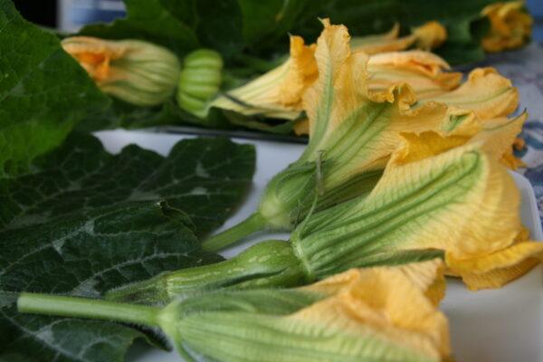 kwiaty-dynii-cukinii
